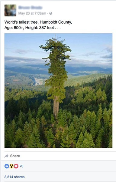 Humboldt Tallest Tree in World